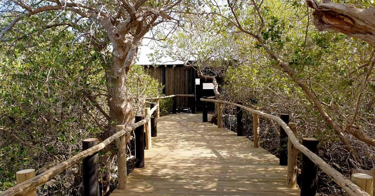 Pasarela de madera a través de un manglar